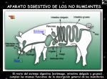 aparato digestivo de los no rumiantes1