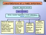 caracter sticas de la pared intestinal