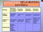 estructura de la mucosa gastrica1