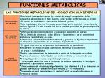 funciones metabolicas