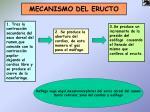 mecanismo del eructo