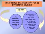 mecanismos de absorci n por el intestino delgado