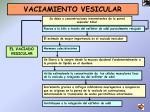 vaciamiento vesicular