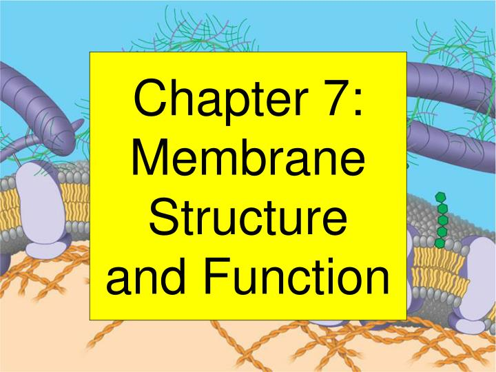 chapter 7 membrane structure and function n.