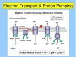 electron transport proton pumping