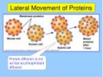 lateral movement of proteins