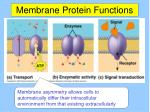 membrane protein functions