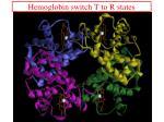 hemoglobin switch t to r states