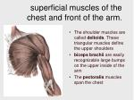 superficial muscles of the chest and front of the arm