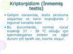 kriptor idizm nmemi testis