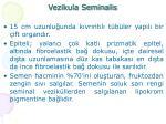 vezikula seminalis