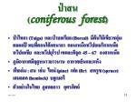 coniferous forest1