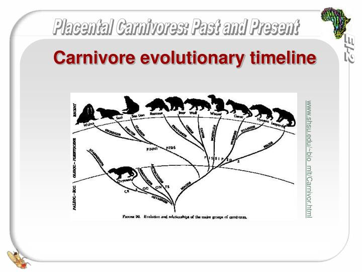 Carnivore evolutionary timeline
