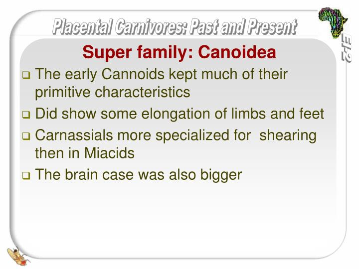 The early Cannoids kept much of their primitive characteristics