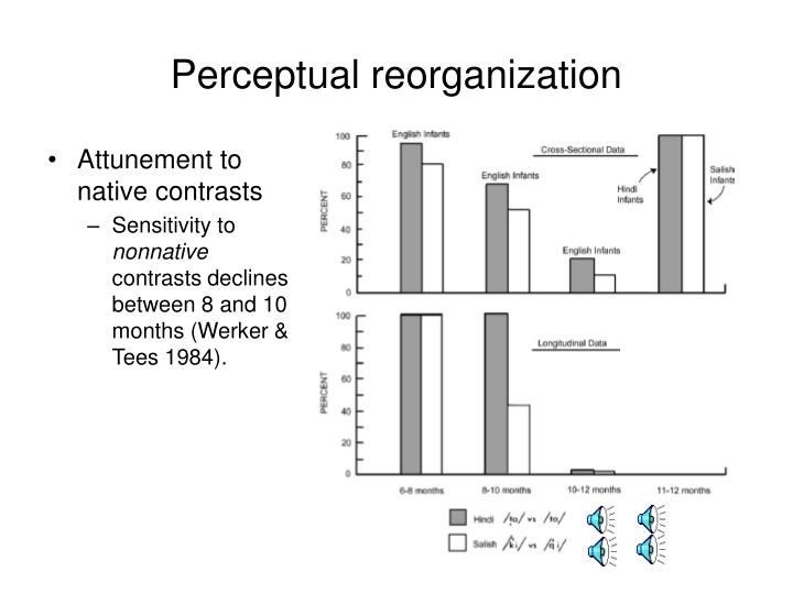 Perceptual reorganization