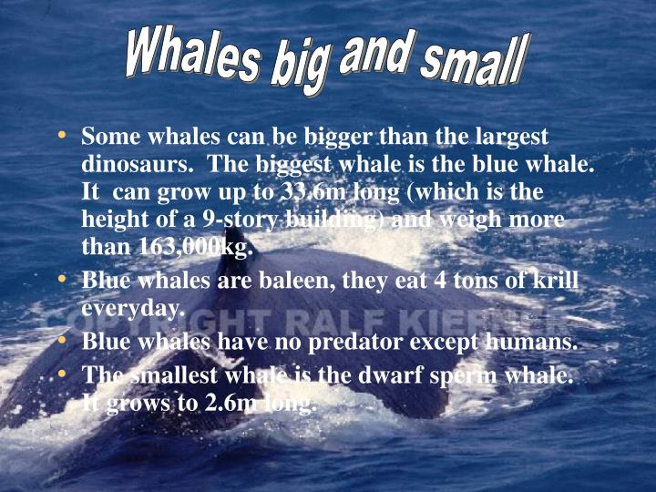 Whales big and small