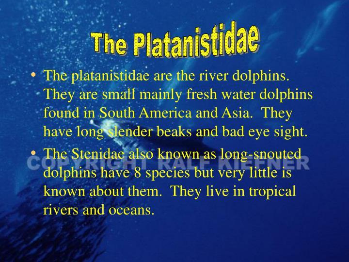 The Platanistidae