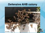 defensive ahb colony