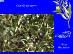 oliven l aus istrien
