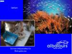 schnorchelparadies f r biologiekurse