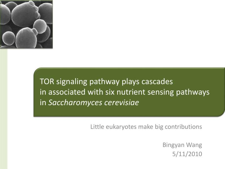 little eukaryotes make big contributions bingyan wang 5 11 2010 n.