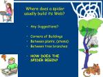 where does a spider usually build its web