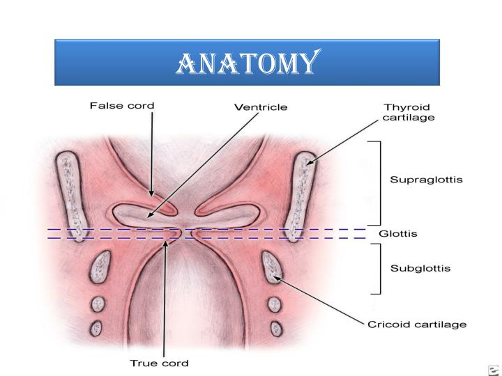 Ppt Acute Inflammations Of Larynx Powerpoint Presentation Id1350789