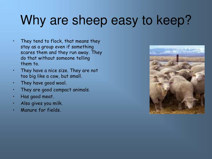 Why are sheep easy to keep