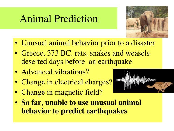 Animal Prediction