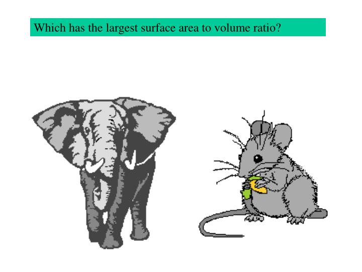 Which has the largest surface area to volume ratio?