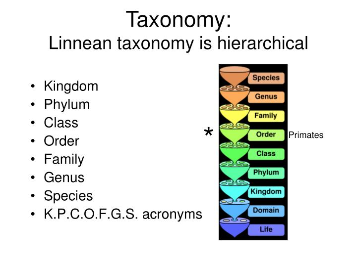 the taxonomy of three homo species Describe the taxonomy of the human species (homo sapiens) start from the domain name then narrow down the taxonomy to the genus homo then lastly the species sapiens for each main category, state a classification criteria for the category for example, the phylum chordata includes to those animals that present a structure called notochord.