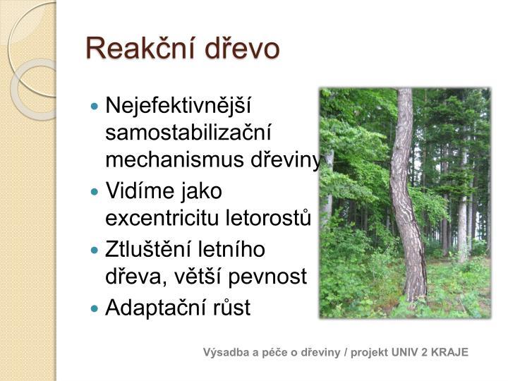 Reakční dřevo