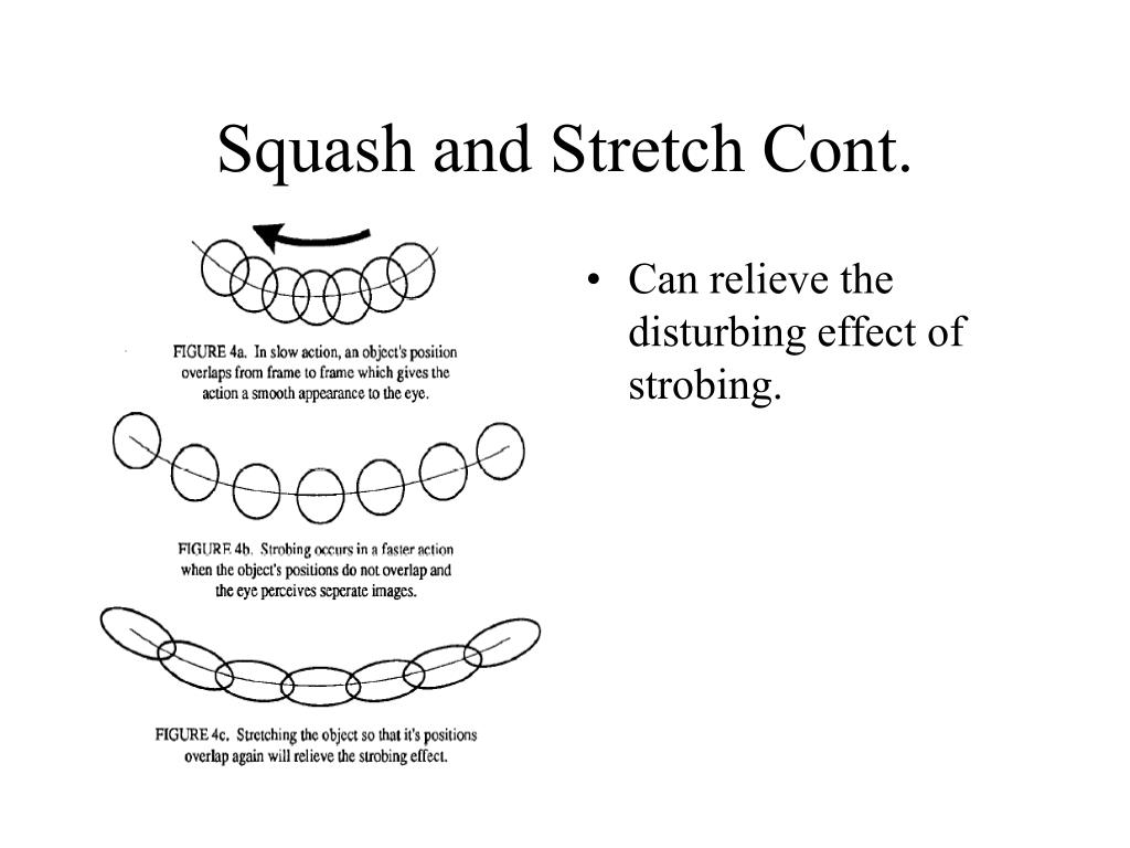 Squash and Stretch Cont.