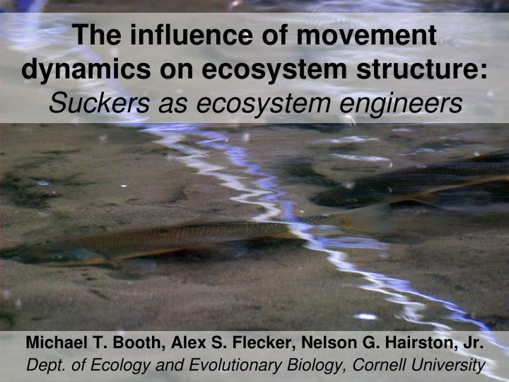 the influence of movement dynamics on ecosystem structure suckers as ecosystem engineers n.