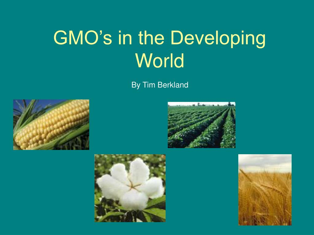 gmo s in the developing world l.