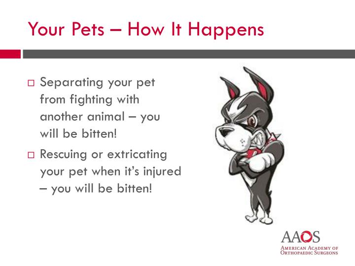 Separating your pet from fighting with another animal – you will be bitten!