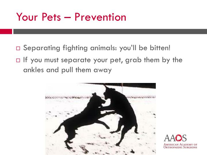 Separating fighting animals: you'll be bitten!