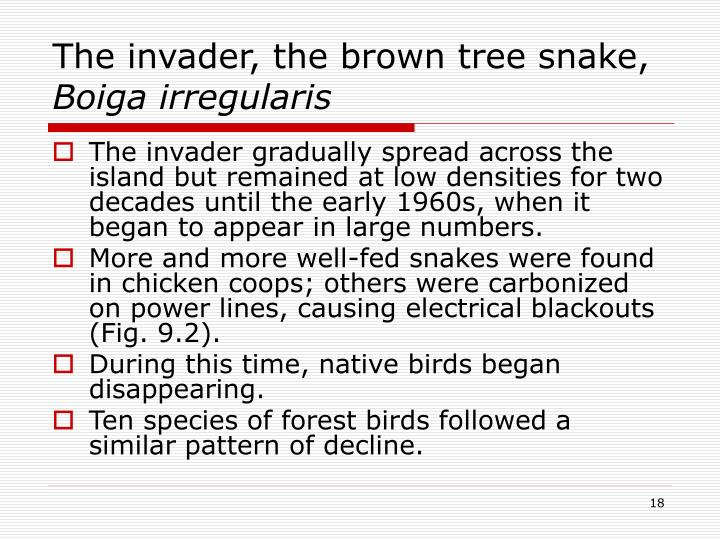 The invader, the brown tree snake,