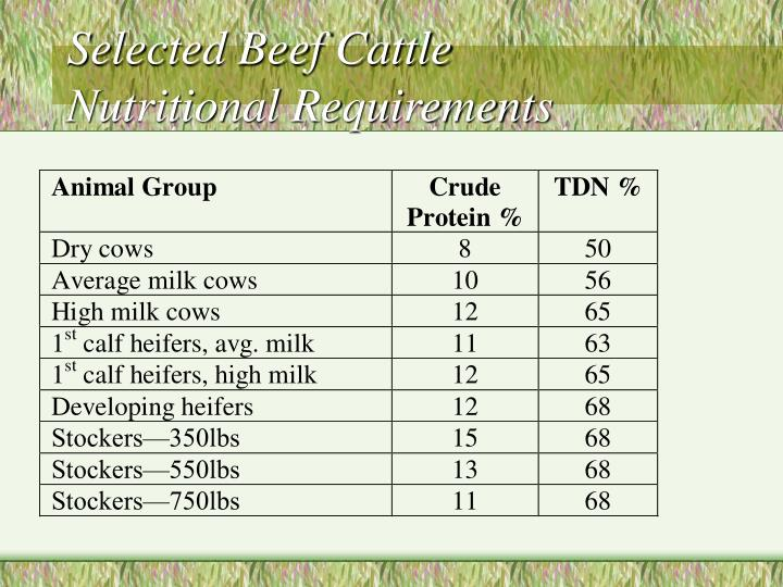 Selected Beef Cattle