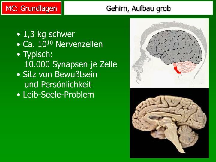 PPT - VL Bewegungswissenschaft 6. Motor Control: Grundlagen ...