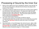 processing of sound by the inner ear