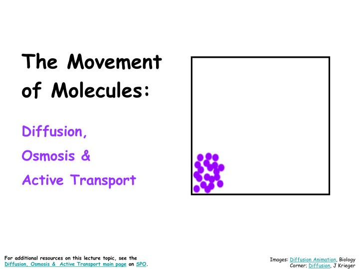 Facilitated Diffusion And Active Transport Venn Diagram Schematic