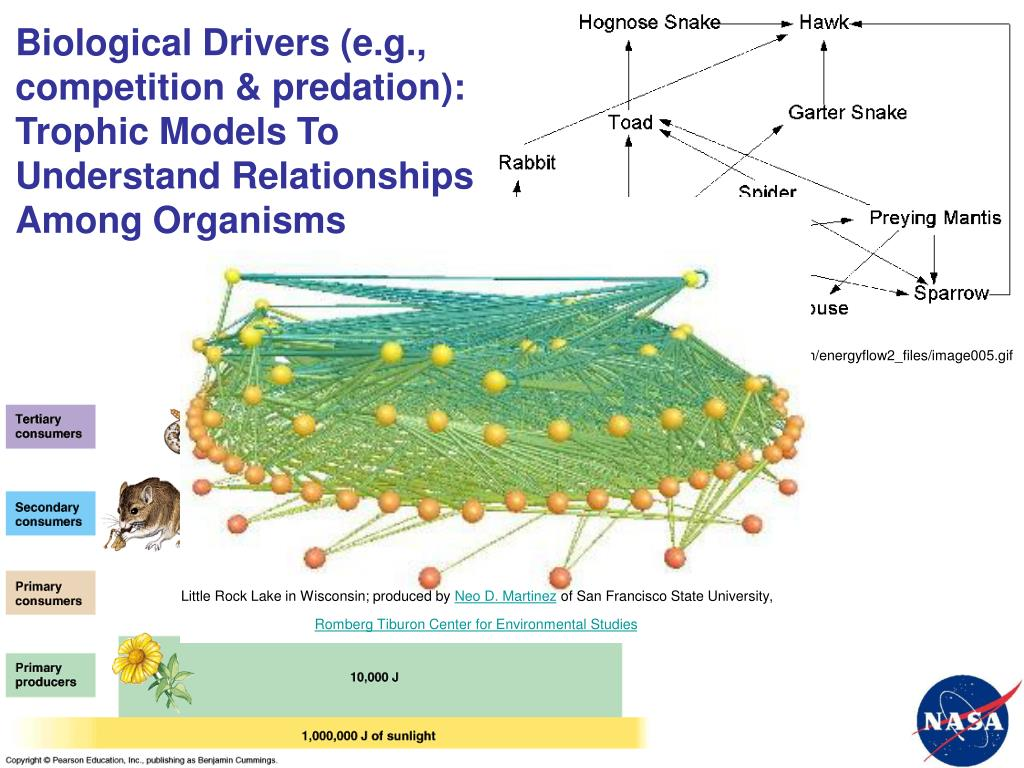 Biological Drivers (e.g., competition & predation):