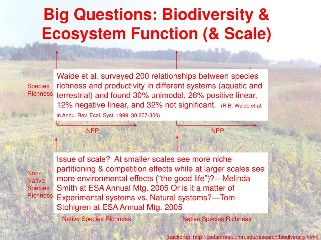 Big Questions: Biodiversity & Ecosystem Function (& Scale)