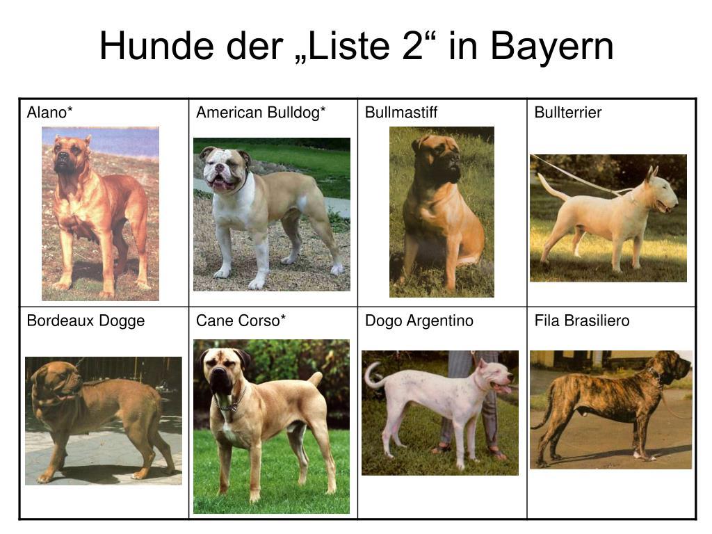 Ppt Gibt Es Einen Kampfhund Powerpoint Presentation Free Download Id 1363300