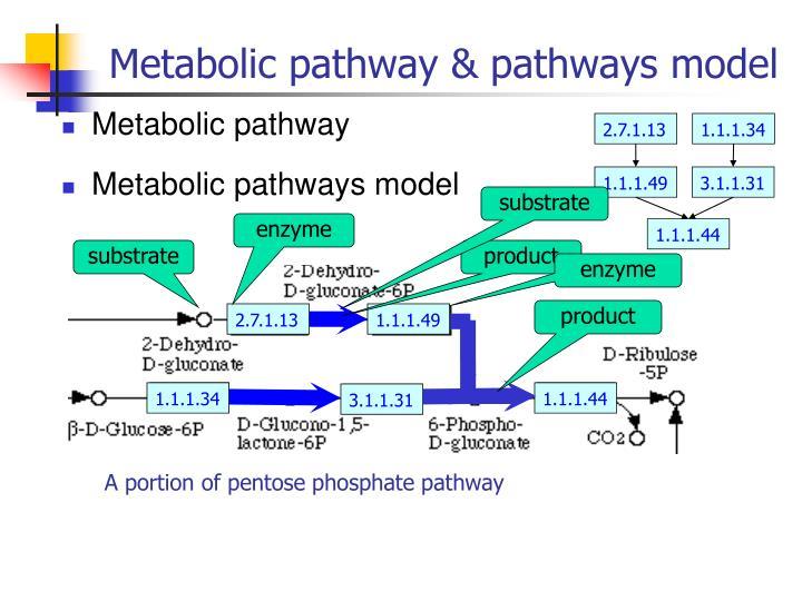 Metabolic pathway pathways model