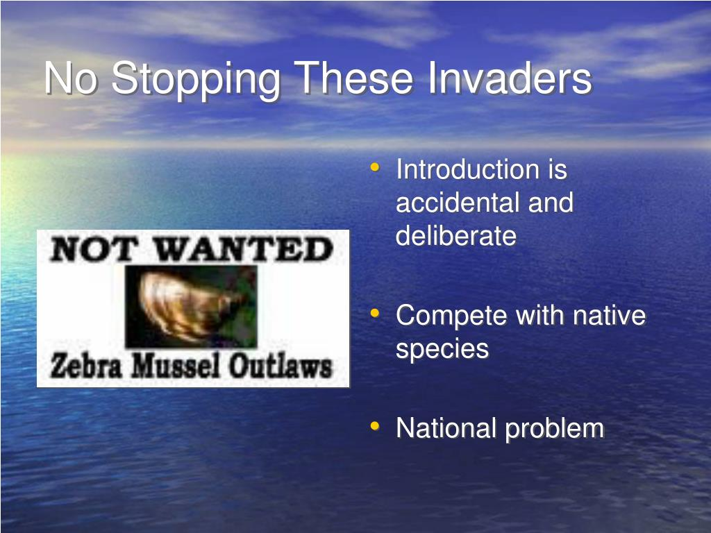 No Stopping These Invaders