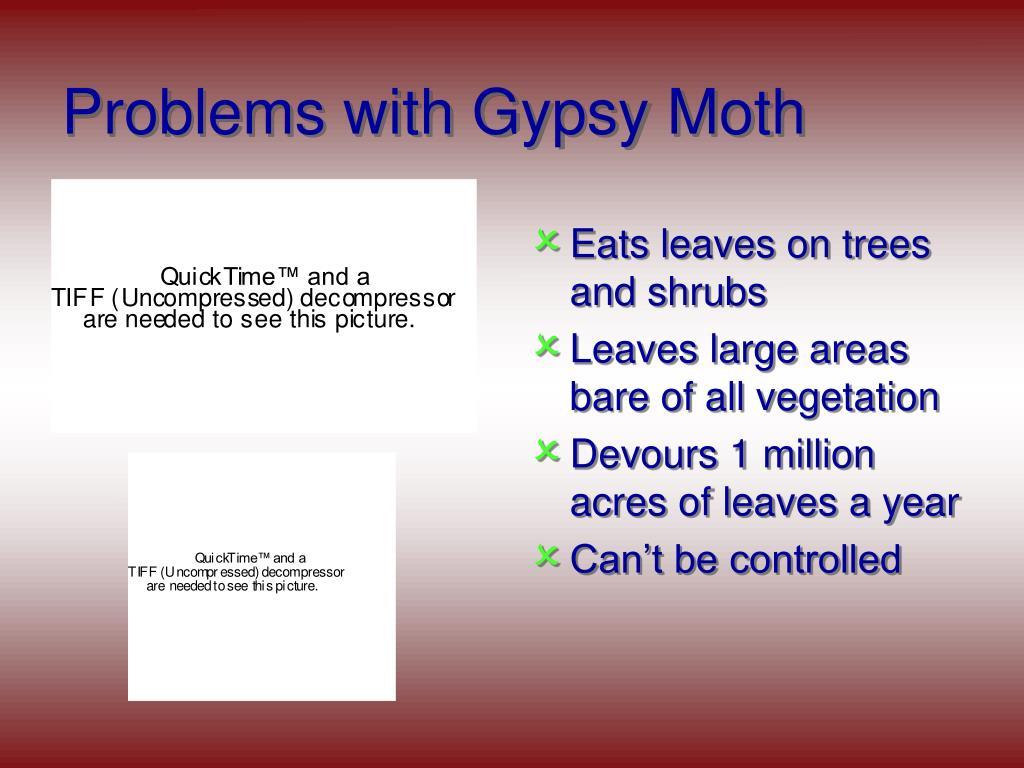 Problems with Gypsy Moth