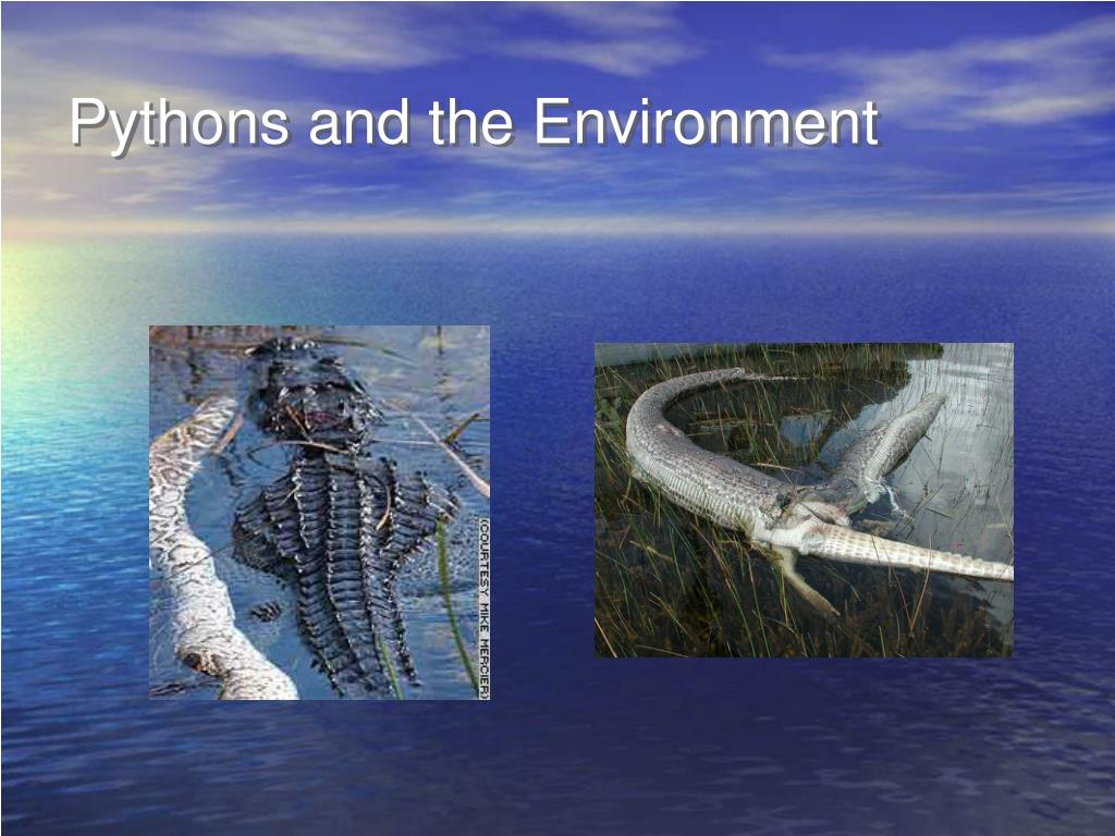 Pythons and the Environment