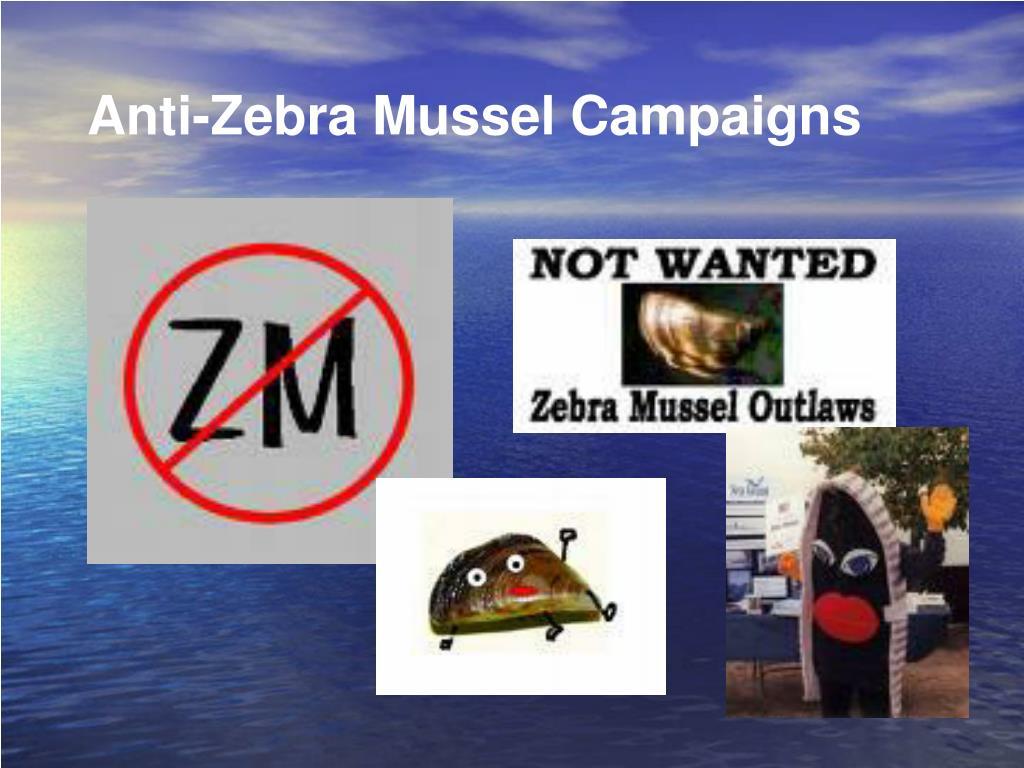 Anti-Zebra Mussel Campaigns